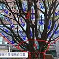 柳樹按摩法