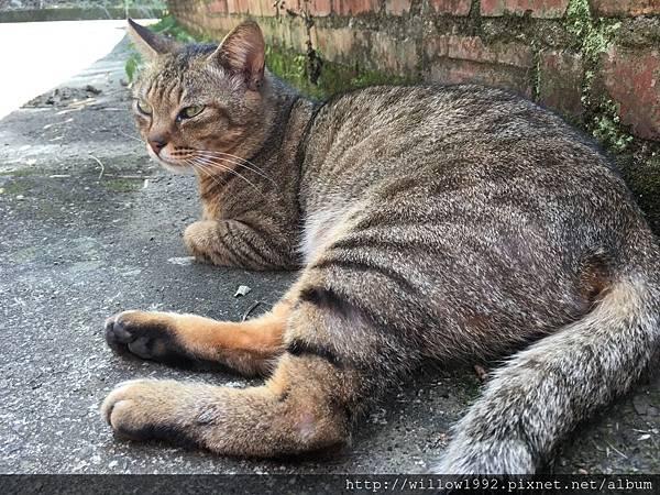 貓很怕生  不親人.JPG