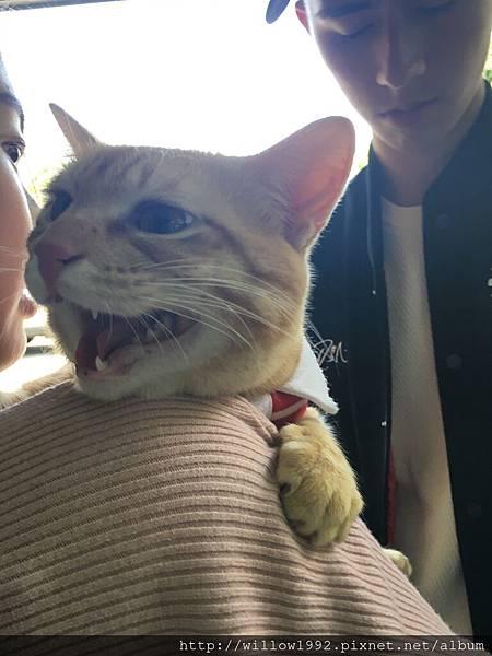 貓咪與小情侶.JPG