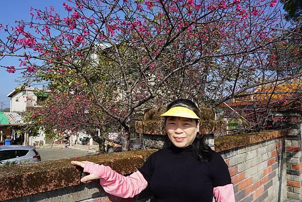 57歲老美與櫻花.JPG