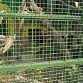躲的很遠的黑豹
