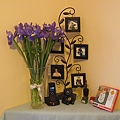 忽然覺得紫色的鳶尾花插在客廳也挺好看的XD