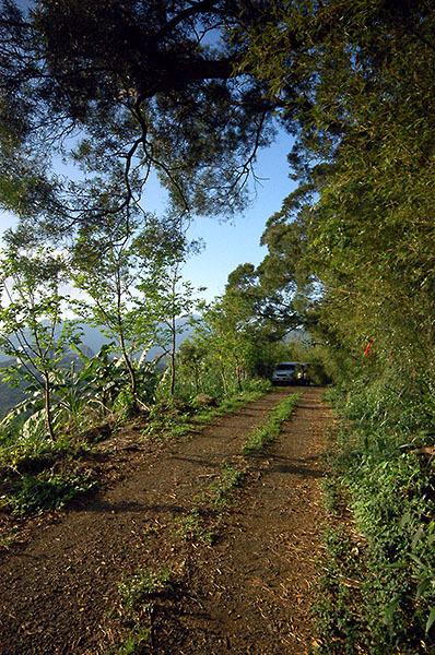 16:39 H429M 由陽明山華崗而來的小產道,土路靠崖邊的邊坡上,種植一排山櫻花。
