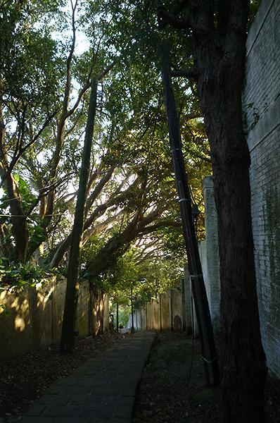 17:07 H406M 下竹林步道口的石階、老樹、白牆、電杆交織出一幅小路的美麗意像。