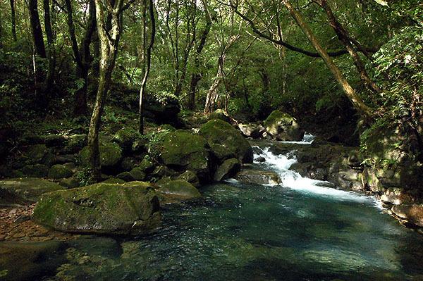 平林坑溪2
