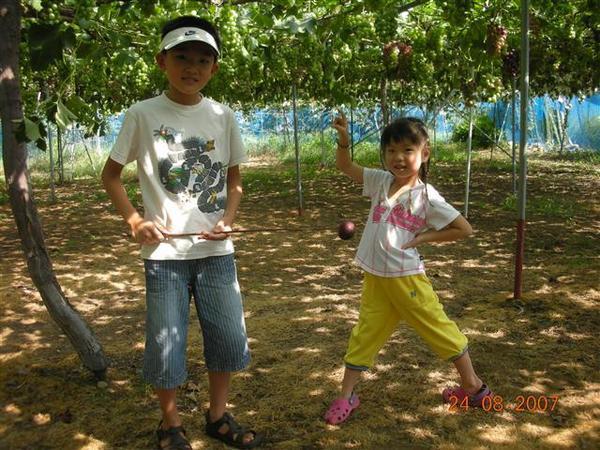 960824-D天童地區水果園07.JPG