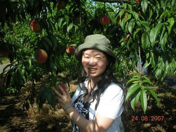 960824-D天童地區水果園11.JPG