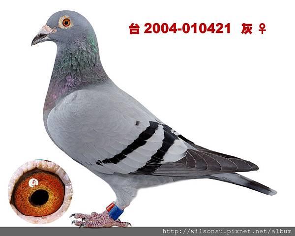 楊朝安42-台2004-010421 灰母拷貝
