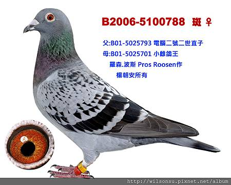 楊朝安44-B2006-5100788 斑母拷貝
