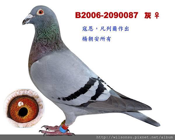B2006-2090087 灰母