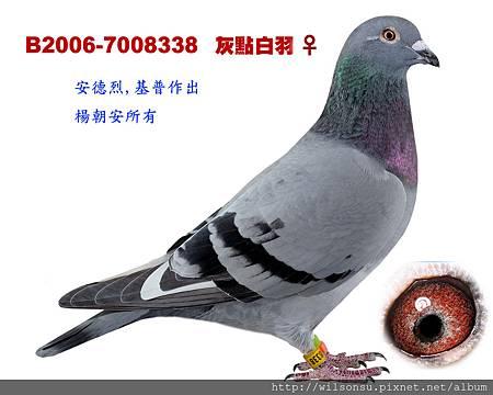B2006-7008338 灰點白羽母拷貝