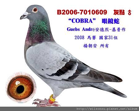 楊朝安6-B2006-7010609 灰點公拷貝