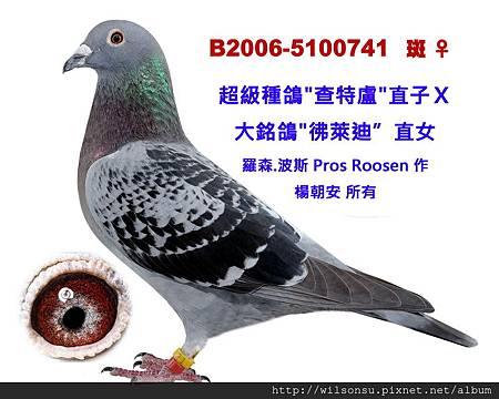 B2006-5100741 斑母拷貝
