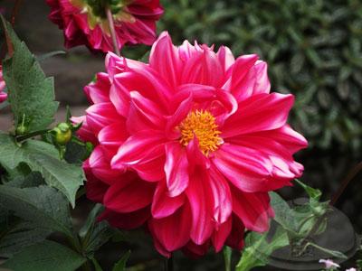山行玫瑰29