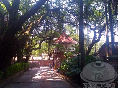 淡江高中n中學-04入口處的綠蔭景緻