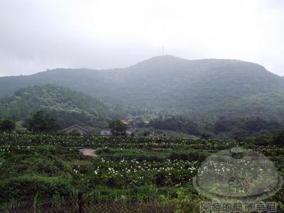 陽明山竹子湖海芋01-竹子湖一景