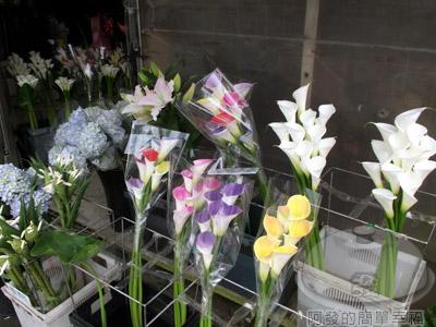 陽明山竹子湖海芋17-商家販售的花卉