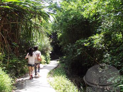 白石湖n後湖濕地05-竹林小徑