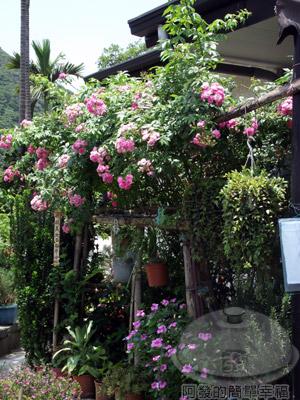 白石湖n後湖濕地10-店家栽種的花卉