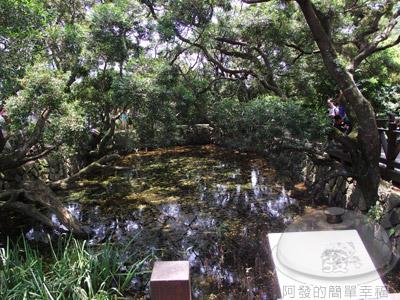 白石湖n後湖濕地11-生態池塘