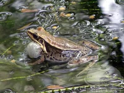 白石湖n後湖濕地12-生態池塘