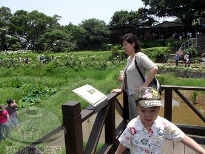 白石湖n後湖濕地19-蓮花池景觀台