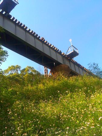 三義龍騰斷橋11鬼針草與鐵道