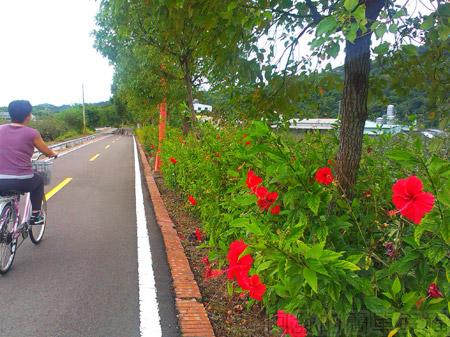 東勢-東豐自行車綠廊11野花