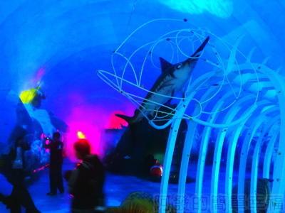 紙風車台灣動物昆蟲創意展10-抹香鯨主題館