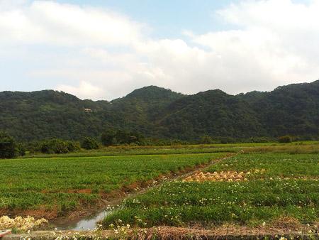 大溪韭菜花海15寬闊的田野景色
