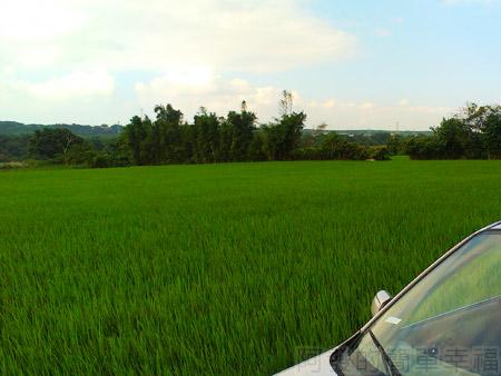大溪韭菜花海16翠綠的田野