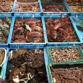 改建後的富基魚港08種類繁多的平價活海鮮