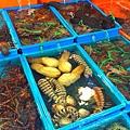 改建後的富基魚港09種類繁多的平價活海鮮