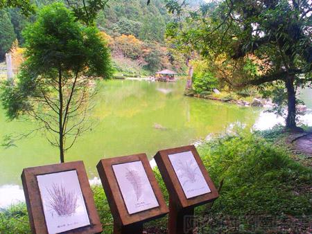 北橫明池賞楓27環湖小徑一景
