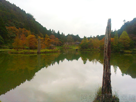 北橫明池賞楓29湖中楓情