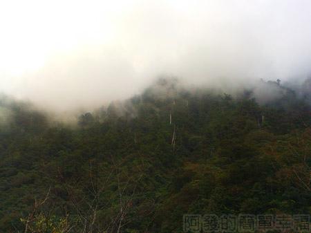 北橫明池賞楓40雲霧瀰漫的山嵐