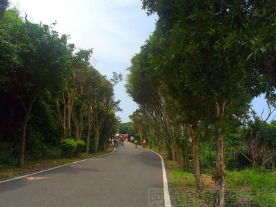 桃園新屋綠色隧道10.jpg