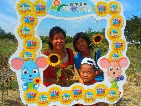 桃園觀音-向陽農場13太陽花花圃