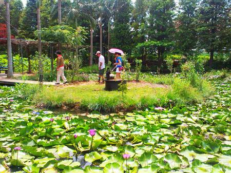 蓮荷園休閒農場13-環繞在蓮花池中的圓形小島