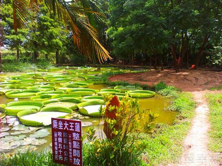 蓮荷園休閒農場16-大王蓮池