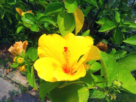 蓮荷園休閒農場20-一旁盛開的黃花