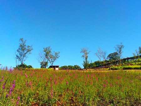 大溪花海農場01紫色夢幻