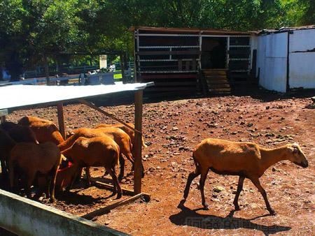大溪花海農場12可愛動物區
