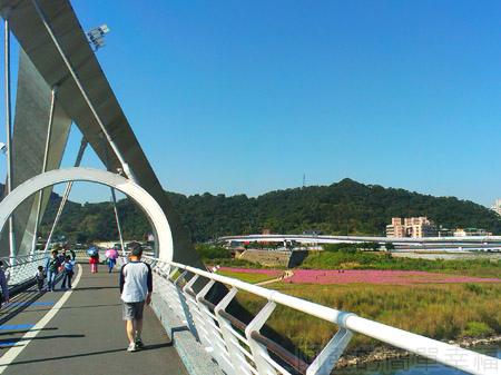 新店陽光運動園區15陽光橋上鳥瞰橋下花海