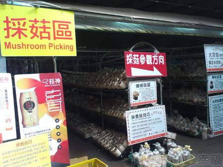 台中新社採菇趣II-12阿亮香菇園-採菇區入口
