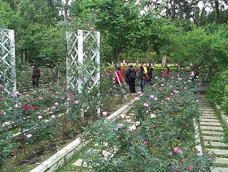 2014士林官邸玫瑰花展20玫瑰園區