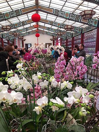 2014士林官邸玫瑰花展30新蘭亭內