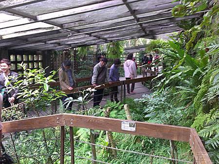 2014士林官邸玫瑰花展37生態園區