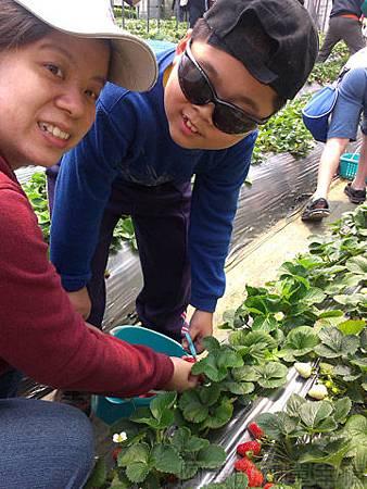 內湖碧山路採草莓I-18莓圃-開心的模樣
