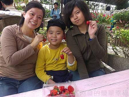 內湖碧山路採草莓I-22莓圃-準備享用